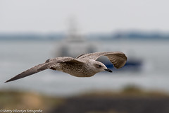 Matty Wientjes thema Vogels Q3-1