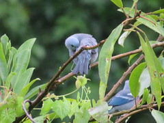 Vögel beim Cocha Machuwasi