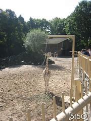 IMG_2490_Burgers_Zoo
