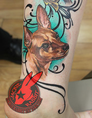 Minpin Chiwawa Dog Pet Puppy Quimby Memorial Portrait Coloe Realistic 3d Tattoo by Jackie Rabbit