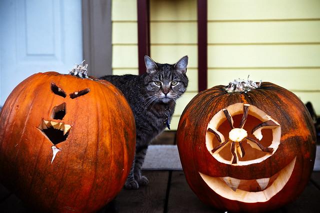 Pumpkin/cat/pumpkin