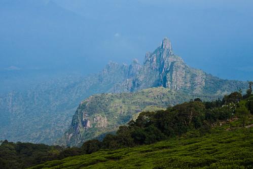 View of Rangaswamy peak from Kodanadu view point, Kotagiri, Tamilnadu