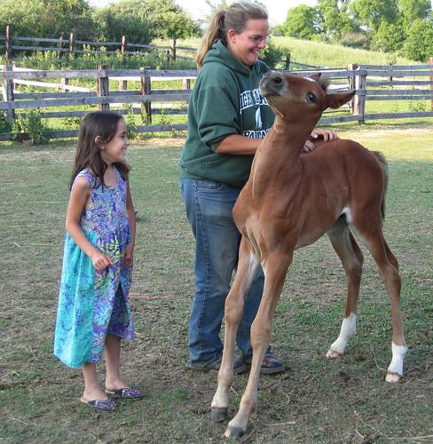 brandy,foal,allie.JPG
