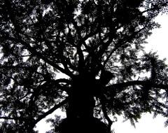 Old Tree - China