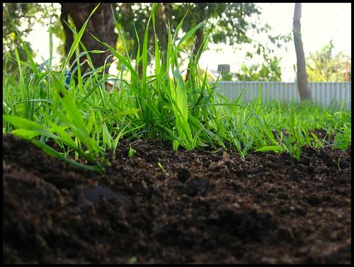 Compost 06/08/2007
