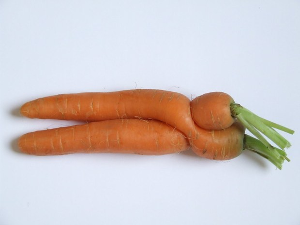 hugging & kissing carrots