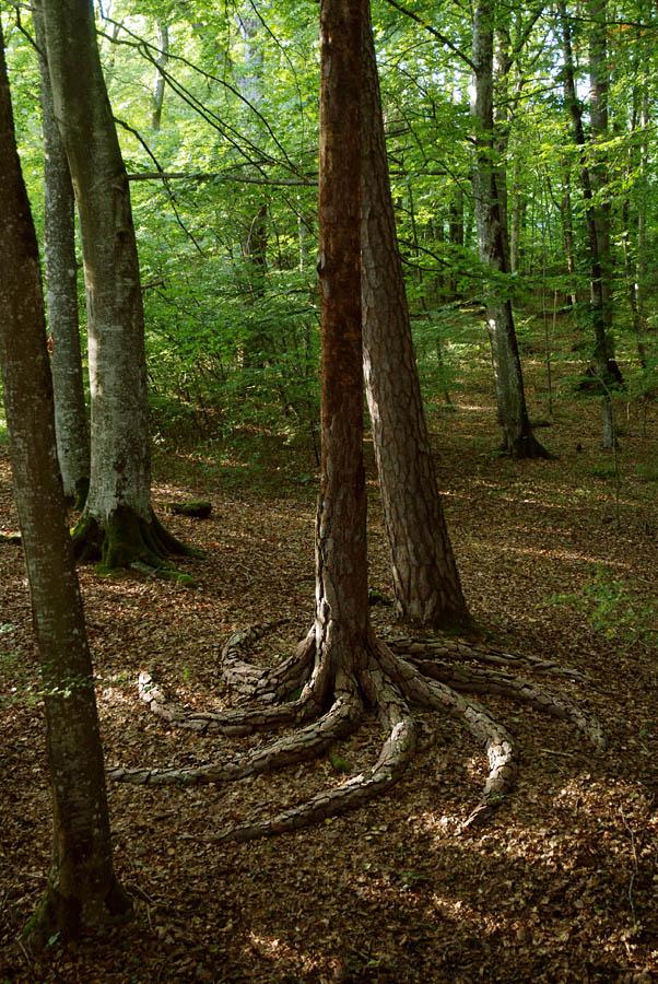 Land Art, Racines (2 photos)