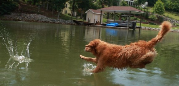 One short trip for a stick, one giant leap for a dog.