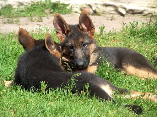 mekki and Maika