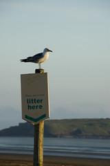 litter here