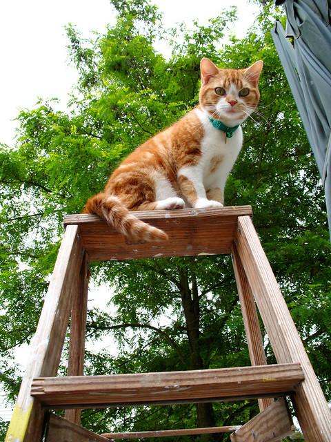 Mack on a Ladder Pt. 2