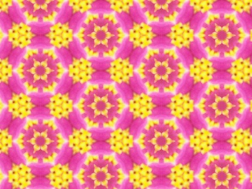 Bright Yellow Flowers in Pink Bursts 12.1