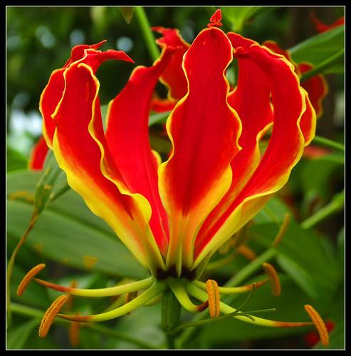 hot flower