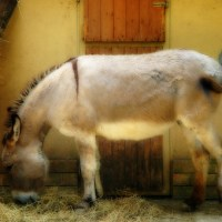 Palm Sunday Reflection: Offering yourself as the donkey