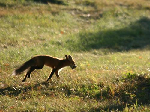 foxandpear