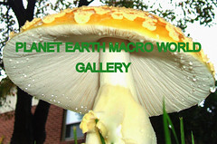 PLANET EARTH MACRO WORLD group gallery. PLANET EARTH MACRO WORLD group takes an up close and personal view of nature. Please come in and view a very different world. Showcase galleries on display in PLANET EARTH NEWSLETTER. New Up Dates ck. them out.