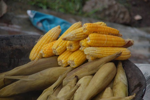Selling cooked maize in a market