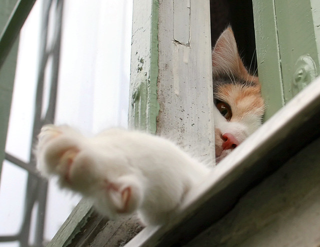 Curious Window Cat