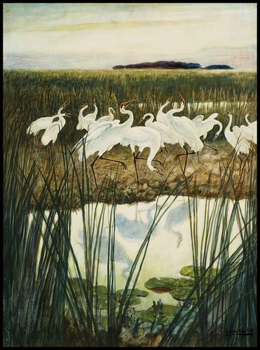 "'Dance of the Whooping Cranes' by N.C. Wyeth Illustration for ""The Yearling"""