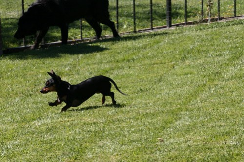 Holli running