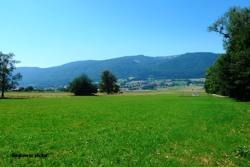View towards Jura from Altreu