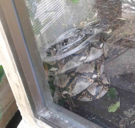Snake outside
