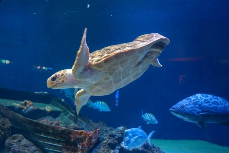 10.16. - San Diego. Birch Aquarium