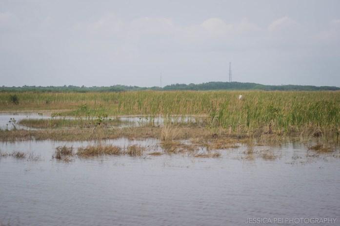 Florida Everglades Grassland