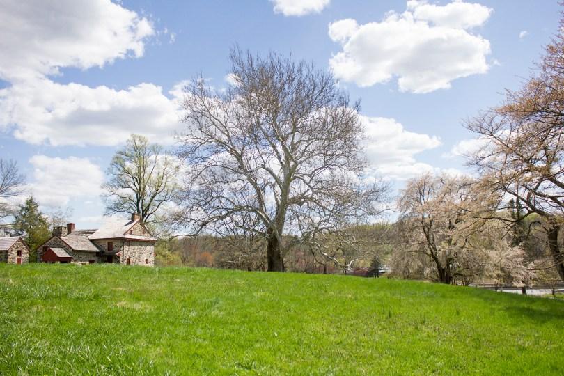 brandywine-battlefield-revolutionary-war-chadds-ford-pa-old-tree