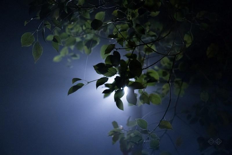 日常 深夜大霧