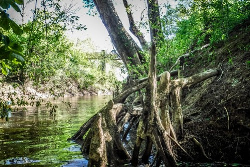 Turkey and Stevens Creeks-118