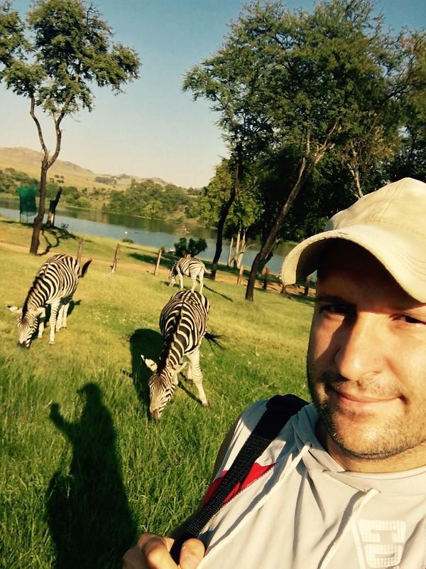 Zebras at Heia Safari