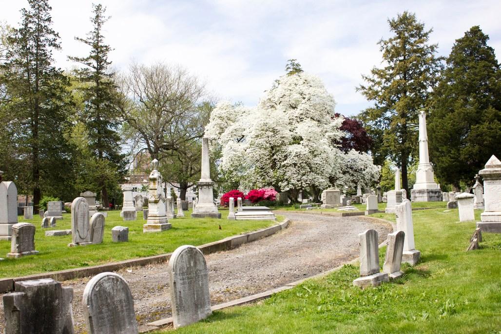 wilmington-brandywine-historical-cemetary-path-white-tree