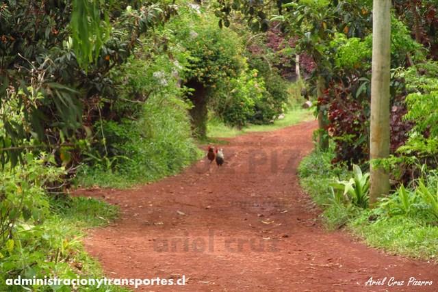 Camino rural - Isla de Pascua