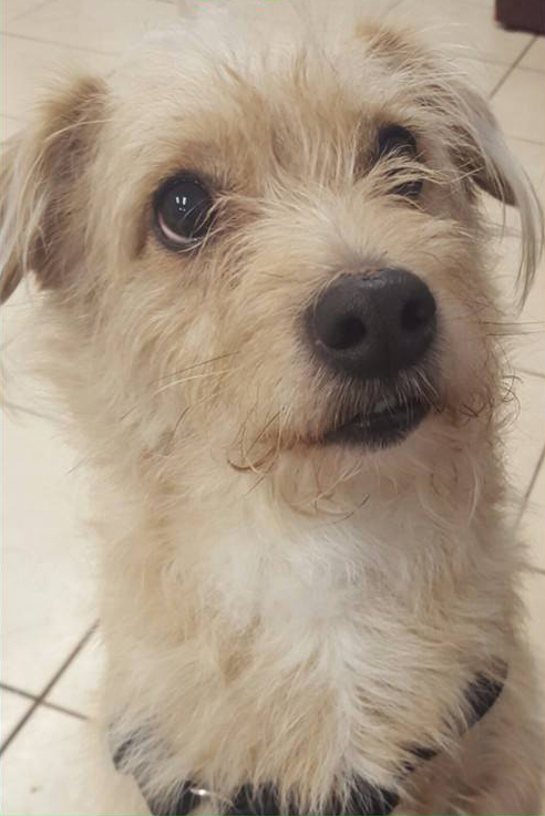 SHELTER SUNDAY Meet Scrappy Dachshundterrier Mix And