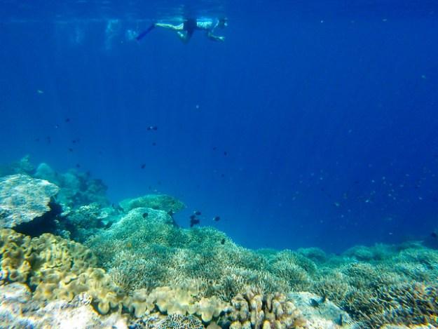 Snorkeling at Banda Besar, Banda Islands