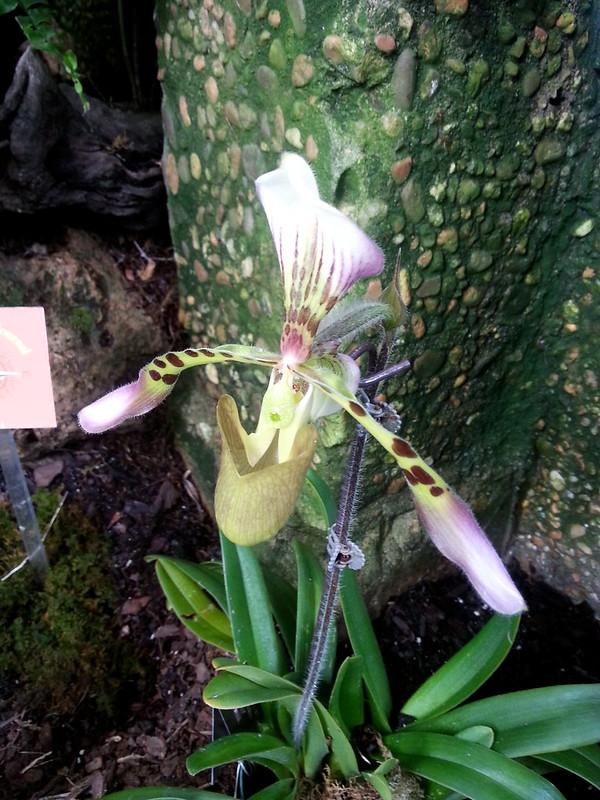 20130307_160909 United States Botanical Garden Conservatory