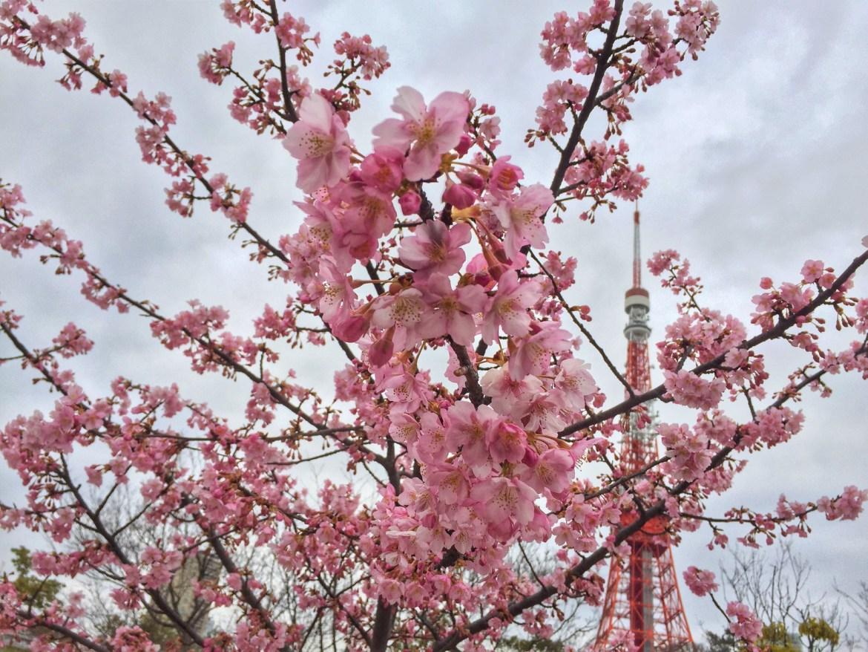 Shiba Koen Plum Blossoms