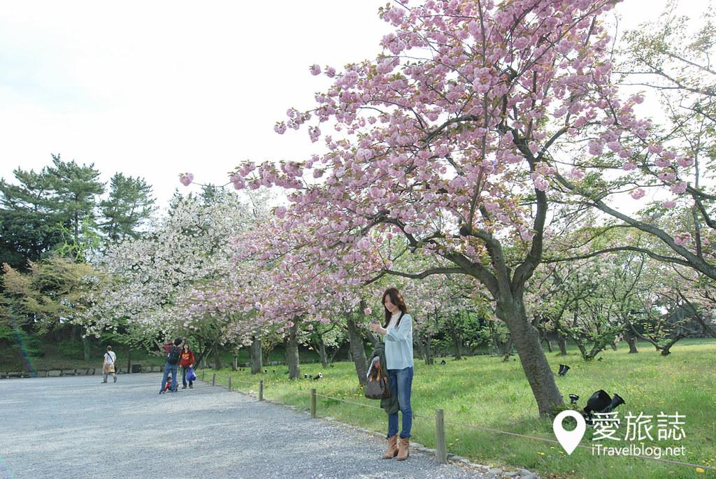 京都赏樱景点 元离宫二条城 15