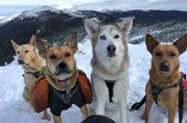 Hiking-With-Dogs-1
