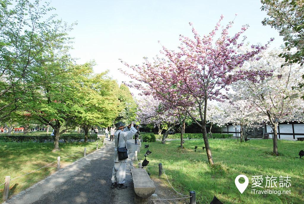 京都赏樱景点 元离宫二条城 35