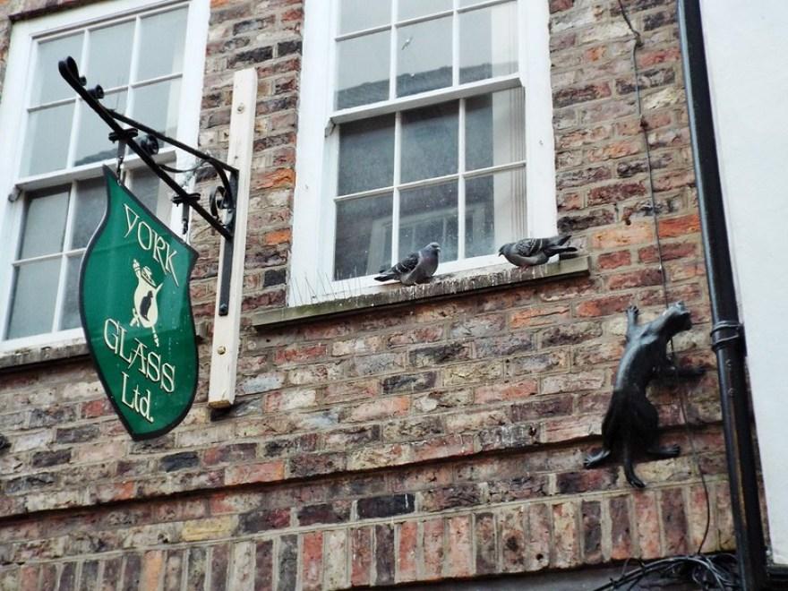 York Cat Trail - the tea break project solo female travel blog