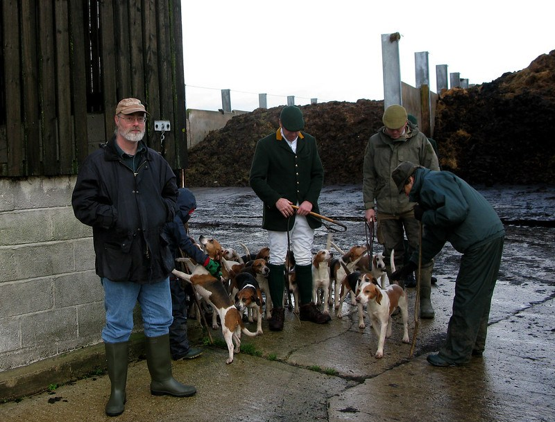 me and the beagles