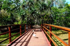 bridge of ibis