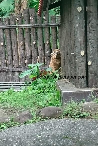 動物園 アルパカ