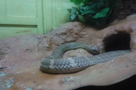 Snake behind glass