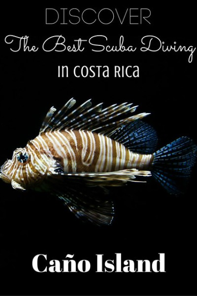 Discover The Best Scuba Diving In Costa Rica At Caño Island