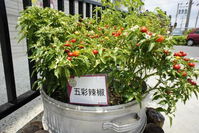 台南市後壁區卡多利亞良食故事館 (45)