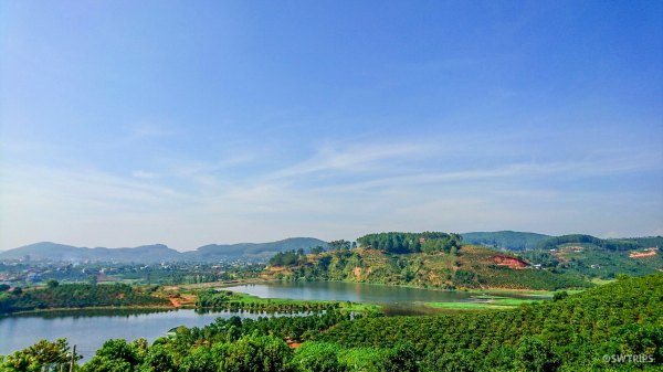 Coffee Plantation - Da Lat, Vietnam.jpg