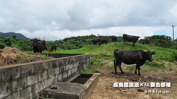 29石垣牛